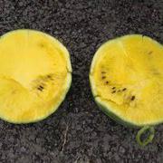 黄瓤西瓜种子黄肉礼品小西瓜种子
