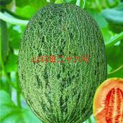 山科蜜二十六号网纹甜瓜种子