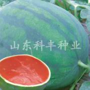 山科无籽西瓜种子