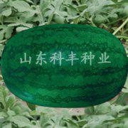 高抗三连冠西瓜种子