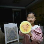 芸熙黄瓤西瓜种子
