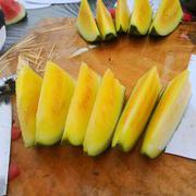 冰花系列黄瓤西瓜种子
