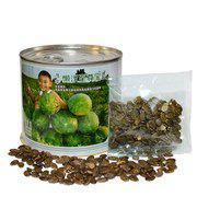 中科茂华蔬菜水果种子抗重茬西瓜种子懒汉至尊宝大红瓤 大果