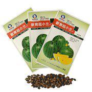 中科茂华蔬菜水果种子礼品西瓜种子新育超小兰黄肉黄瓤西瓜种子