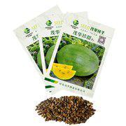 中科茂华蔬菜水果种子茂华珍甜礼品西瓜种子高糖黄肉甜妞西瓜种籽