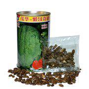 中科茂华蔬菜水果种子抗重茬西瓜种子免整枝懒汉奇迹大红瓤大果