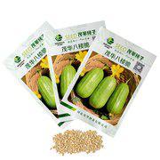 中科茂华水果蔬菜种子八棱脆菜瓜种子甜瓜种早熟高产低糖菜瓜种籽