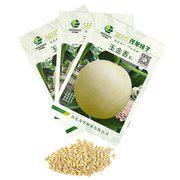 中科茂华水果蔬菜种子玉金香白皮甜种子中熟高产厚皮大果香瓜种子