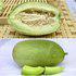 中科茂华日本王子甜瓜种子薄厚皮中间型景甜一号绿肉