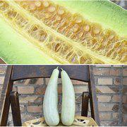 中科茂华羊角脆甜瓜种籽早熟茂华羊角蜜羊角酥香瓜种子