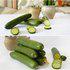 茂华蔬菜种子进口水果黄瓜种子全雌系迷你水果黄瓜种子耐寒型