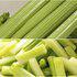中科茂华蔬菜种子脆丽西芹种子高亮度芹菜种子不空心抗病高产香芹