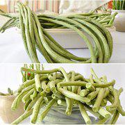中科茂华蔬菜种子青嫩长龙豇豆种子翠绿色长豆角种子条长1米高产