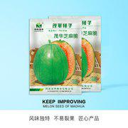 中科茂华水果蔬菜种子芝麻脆甜瓜种子薄皮香瓜红瓤绿皮甜种子育苗