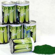 拿破仑皇帝 高产西芹种子 法国进口芹菜种子