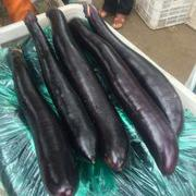 黑艳长茄种子 韩国进口