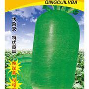 青脆绿霸水果萝卜种子