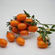 金冠F1小黄番茄樱桃番茄种子