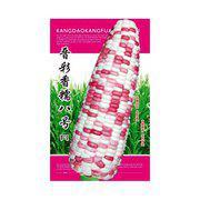 高产抗倒伏糯玉米种子晋彩香糯八号