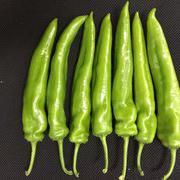 早熟羊角形辣椒种子 海丰104羊角椒种子