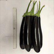 长棒形早熟紫黑色长茄子 海丰长茄2号长茄种子