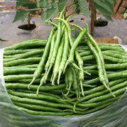 早熟高产辣椒种子 海丰137长线辣椒种子