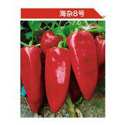 早熟锥形椒种子 海杂8号辣椒种子