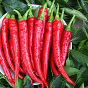 早熟羊角形辣椒种子 海丰335干鲜两用椒种子