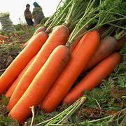 红色巨人胡萝卜种子